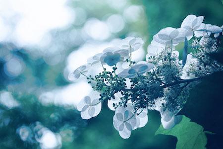 flower522.jpg